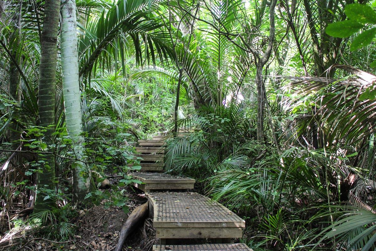 Barry Hadfield Nikau Reserve