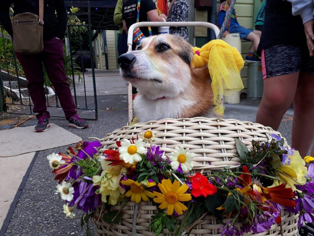 Paekākāriki Pride Festival: gone to the dogs