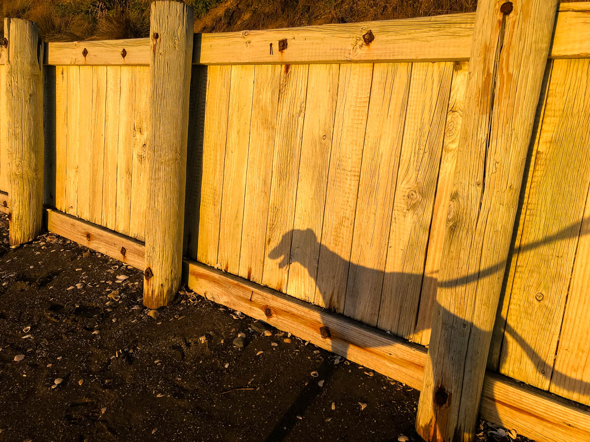 Exterior World: A community photo-essay of scenes from a lockdown walk